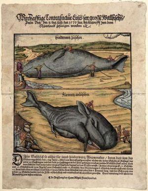 Representation d'un cetace au XVIe siecle.
